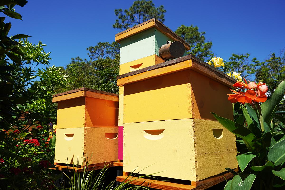 Bee Well Honey - Gallery