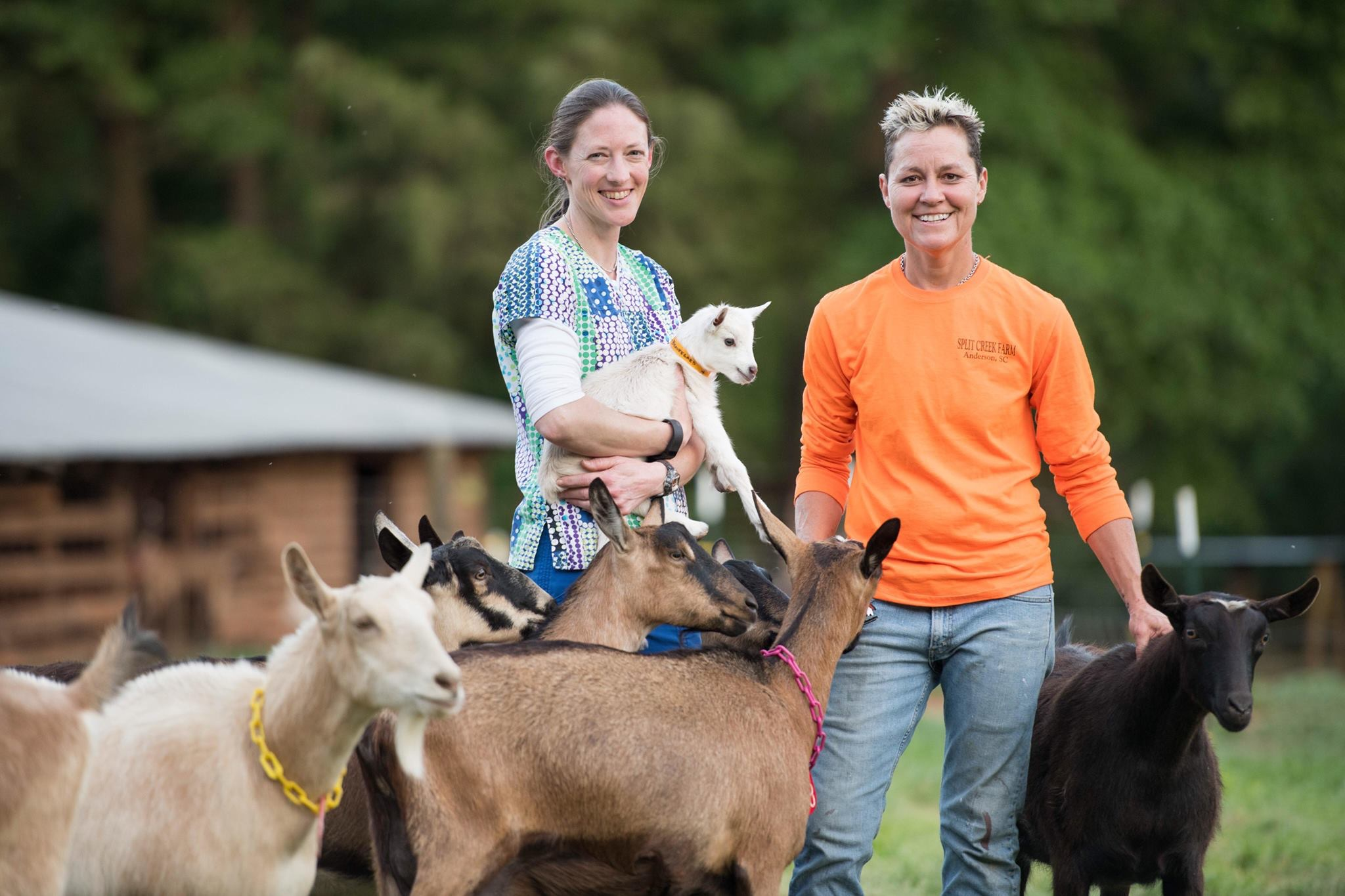 GOATS are BEAUTIFUL, and Split Creek Farm is here to prove it! - Featured Image